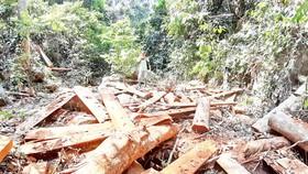 Dai dẳng nạn phá rừng ở Quảng Nam