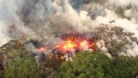 Nắng nóng gay gắt, nhiều cánh rừng nguy cơ cháy cao