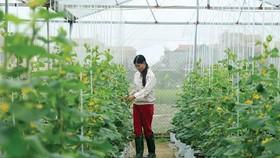 Đẩy mạnh chuyển dịch cơ cấu nông nghiệp