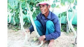 Ông Thống đưa mướp rắn vào đảo Lý Sơn