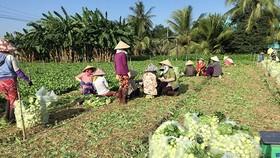 Thiếu hướng dẫn xác nhận thu nhập ổn định từ đất nông nghiệp