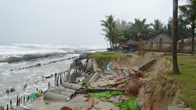 Bờ biển Cửa Đại (TP Hội An, Quảng Nam) bị sạt lở nghiêm trọng