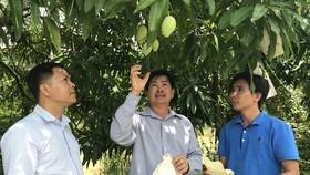 TPHCM kích cầu các tỉnh sản xuất an toàn