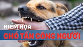 Hiểm họa chó tấn công người