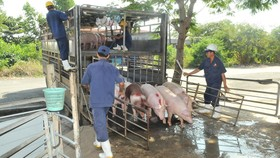 """""""Thủ phủ"""" chăn nuôi heo: Không mạo hiểm tái đàn"""