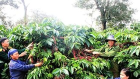 Coffee price falls 14.2 percent.
