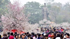 Annual Cherry Blossom Festival to return to Hanoi in March