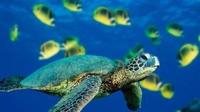 Program to promote conservation of endangered sea turtles
