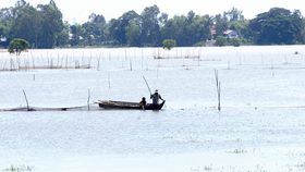 People in the Mekong Delta region are busy fishing when the flooding season has come. (Photo: Sggp)