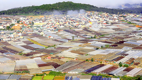 Greenhouses and net houses in Da Lat city