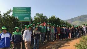 Phân bón Phú Mỹ giúp cam Cao Phong tăng năng suất 17%