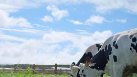 Sống xanh với xu hướng sử dụng sản phẩm Organic