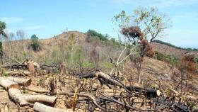 Vụ tàn phá gần 61 ha rừng tại Bình Định: Bắt tạm giam 2 nghi phạm