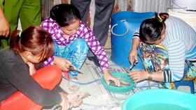 Xử nghiêm việc dùng chất cấm trong hải sản