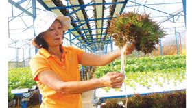 Ứng dụng công nghệ cao AutoPot cho nông nghiệp đô thị