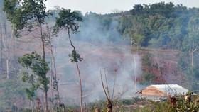 Bài 4: Phải giao rừng cho ai?