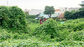 Quy hoạch treo nhiều năm khiến người dân không được xây dựng mới nhà cửa, hình thành những khu phố lụp xụp, đất đai bỏ hoang