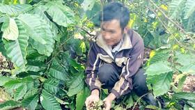 Người lao động ở Gia Lai đi hái cà phê thuê