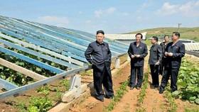 Nhà lãnh đạo Triều Tiên Kim Jong Un (trái) trong một cuộc thị sát nông trại trồng rau ở tỉnh Nam Pyongan.