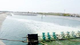Đưa điện phục vụ nuôi tôm của người dân vùng đồng bằng sông Cửu Long