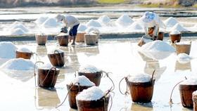 Diêm dân sản xuất muối tại Cần Giờ . Ảnh: THANH HẢI