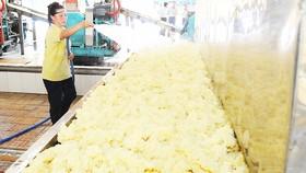 Xuất khẩu cao su nguyên liệu mang lại giá trị không cao. Ảnh: THÀNH TRÍ