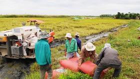 Đất trồng lúa cần quy hoạch công khai để người dân yên tâm sản xuất. Ảnh: THÀNH TRÍ