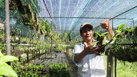 25 năm sống khỏe với nghề trồng lan