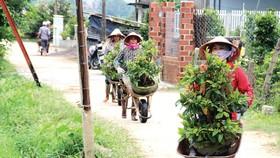 Nông dân miền Trung chuẩn bị vào mùa sau lũ bão