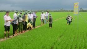 Các chuyên gia của Công ty CP Phân bón Bình Điền giúp nông dân thực hiện mô hình mới. Ảnh: PHAN NAM