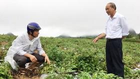 Cánh đồng trồng dược liệu 200ha ở huyện Quản Bạ (Hà Giang)  là một điểm sáng về xây dựng nông thôn mới