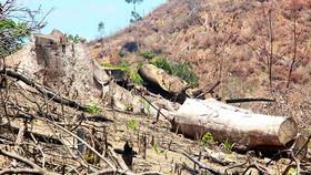 Xử lý cán bộ để mất 61ha rừng ở Bình Định: Vẫn giơ cao đánh khẽ