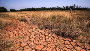 The Mekong Delta suffers from severe drought and salinity intrusion in 2016 (Photo: VNA)