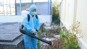 Da Nang steps up measures against dengue fever