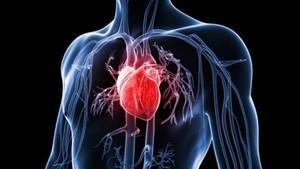 新研究發現,長期處於輕度空氣污染環境中也可能會影響心臟,導致與心力衰竭早期階段類似的心臟變化。(示意圖源:互聯網)