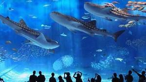 美之海水族館。