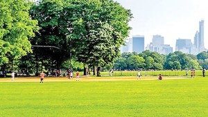 Green cover area reduces 50 percent in HCMC