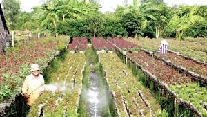 A Tet flower garden in Sa Dec city, Dong Thap province