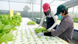 Hi-tech agricultural based-tourism model to be implemented in Dong Thap