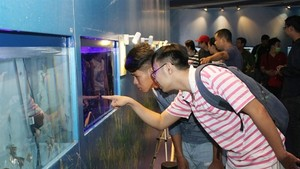 Visitors browse ornamental fish at a fair held in HCM City. (Photo: VNA)