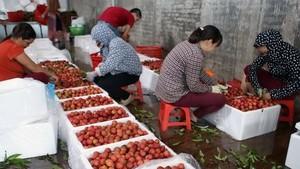 Bac Giang lychees (Photo: VNA)