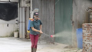 Spraying chemicals to sterilise breeding facilities (Photo: VNA)