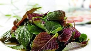 紫蘇葉。(圖源:互聯網)