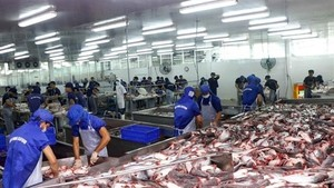 Tra fish is processed for export at Bien Dong Seafood Co Ltd in Tra Noc II Industrial Zone in the southern city of Can Tho.(Photo: VNA)