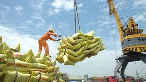 Rice exports drop in first months of this year