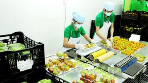 Workers package vegetables at Co.opMart Supermarket (Photo: SGGP)