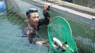 Vụ cá chết hàng loạt ở Quảng Ngãi: Chưa giải quyết thỏa đáng cho người nuôi cá bị thiệt hại