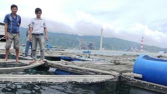 Tình trạng cá nuôi lồng bè gần Nhiệt điện Vĩnh Tân bị chết đã từng nhiều lần xảy ra.