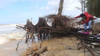 Sạt lở bờ biển huyện Phú Lộc.