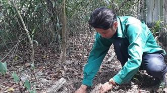 Không khởi tố vụ án Nhà máy xử lý rác thải TP Cà Mau phát hiện 300 xác thai nhi